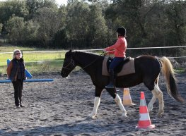 Equitation relationnelle stages cours