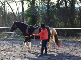 Equitation relationnelle